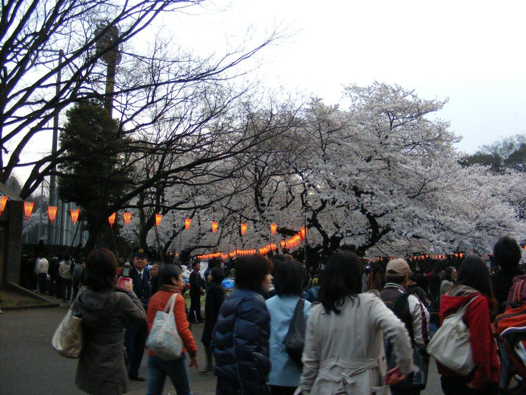 Ueno Park Tokyo © Maria Sannino 2010-2020